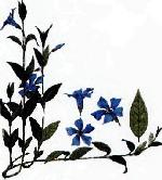 color_art158.jpg